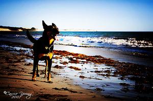 Dogs_190307_003_2_web