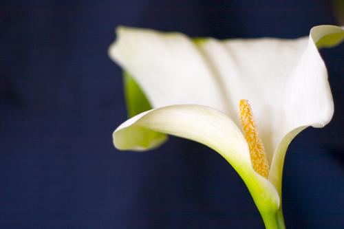 Flowers_080806_009_copy